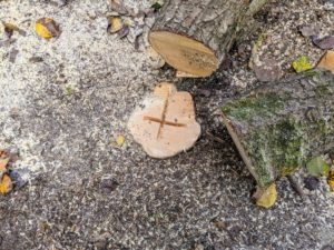 "Most of the time when a tree is removed, its root system remains alive. To help the tree rot more quickly, we make an ""x"" shaped plunge cut in the center of the leftover stump."
