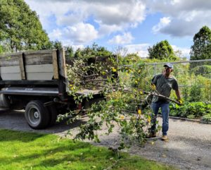 Meanwhile, Fernando gathers the cut branches and loads them onto the dump truck.