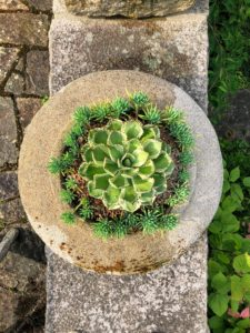 And here is one of my planters from above. I love this view looking down.