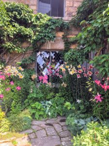 Here are true lilies growing outside this leaded window, with a variety of hostas below. Lilium is a genus of herbaceous flowering plants growing from bulbs and all with large, prominent flowers.