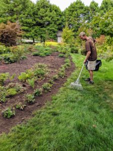 After planting the border, Gavin rakes the surrounding grass to remove any leftover soil or fallen leaves and then gives the bed a good watering.