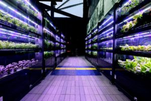 This is a display done by Farmshelf - a company that builds smart indoor farms for restaurants, hotels, and corporate food services, so they can grow fresh, delicious produce year-round, in a compact on-site installation. (Photo by Dimitrios Kambouris/Getty Images)