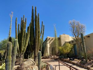 Here it is easy to see how tall these cactuses can grow.
