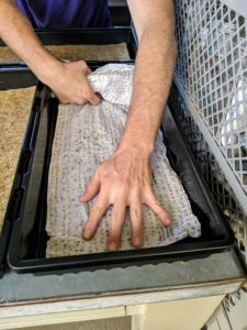 Here, Ryan uses seed sheets, which also fit perfectly into the Cultivator tray. Ryan tries a variety of substrates to see which ones work best.