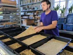 Another growing option… hemp mats, which are 100-percent biodegradable and compostable, all-natural, and ph neutral.