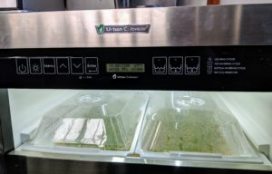 The unit is programmed to do everything needed until the plants are harvested in a couple of weeks. Each tray receives about 18-hours of light a day. I am so happy with my Urban Cultivators - they provide so many delicious greens for me, my family and also my canaries! In another blog, I'll share photos from my new commercial Urban Cultivator - you'll love what we're growing!
