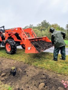 Here, Chhiring adds a good amount of compost next to each potted Cotinus. He uses our new Kubota model M7060HD12 tractor to haul buckets of compost from the backfield where it is made.