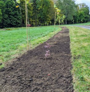 It takes a few days to plant all the trees in this allee, but it looks excellent. London planes grow in almost any soil – acidic or alkaline, loamy, sandy or clay. They accept wet or dry soil and grow best in full sun, but they also thrive in partial shade.