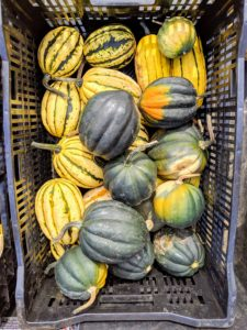 Green acorn squash is small to medium in size and has an ovoid shape lined with deeply furrowed ridges that taper to a point. The flesh is moist and spongy with a hollow center that contains stringy pulp. When cooked, its yellow-orange flesh becomes tender and offers a mildly sweet and nutty flavor. Carnival squash has colorful patches and flecks of dark green, light green, orange, and yellow. They're a popular specialty market variety. These fruits average about a pound each.
