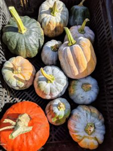 There are so many ways to prepare winter squash – savory soups, sweet desserts, and steamy side dishes are just some.