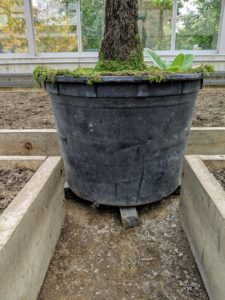 These small black bricks are used as shims and placed under all the pots to allow for good drainage.