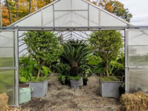 The greenhouses were filled quickly. Back down at the tropical hoop house, look how organized and tidy it is. The weather and schedule allowed the team time to make the greenhouses look great. These plants will be very happy here this winter.