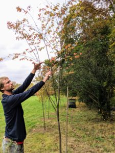 Gavin also trims any dead or poorly growing branches.