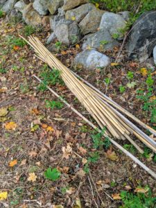 We use bamboo stakes to secure the trees. Bamboo comes in a variety of lengths and is easy to find at garden supply stores.