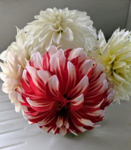 Experiment with the varieties - dahlias look great arranged in different colors.