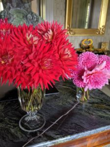These arrangements are on the table in my foyer. At the end of the growing season, dig and store dahlia tubers for the winter to replant next year.