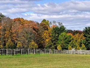 The perimeter around my paddocks displays such wonderful shades of orange, yellow, amber and brown.