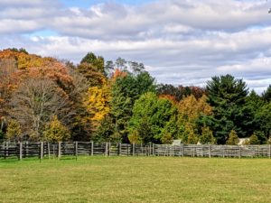 Meanwhile, many of the other trees around the farm are also changing color. I planted many different types of trees in hopes that they would shade, provide climate control, and change color at different times, in different ways. Here is some of the autumn color seen across one of my paddocks.