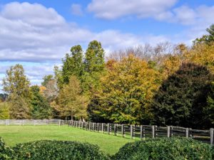 At my farm, I planted many different types of trees in hopes that they would shade, provide climate control, and change color at different times, in different ways.