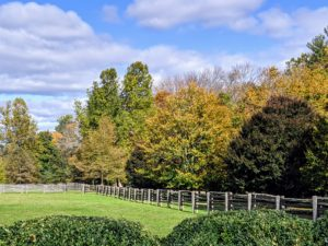 The perimeter around my paddocks displays such wonderful shades of amber, brown, orange and green. I also get many compliments on the fencing around the farm – it is antique spruce fencing I bought in Canada, and it surrounds all my paddocks for the horses, pony, and donkeys.