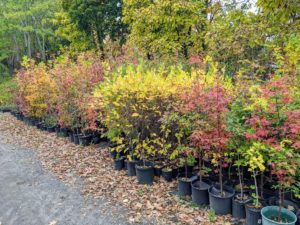 Even the potted tree seedlings are changing. I have thousands of young trees potted up behind my stable. They are doing very well and will eventually be planted in the ground and added to the ever-evolving landscape at my farm.
