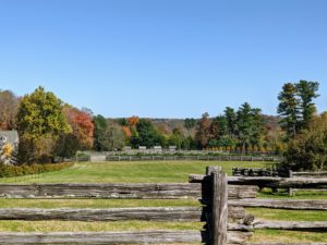 Here is more autumn color across one of my paddocks – my chicken coops are on the right. This view can be seen from my home - it is a lovely sight each morning. What does autumn look like where you live? Let me know in the comments section below.