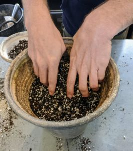 Ryan moves onto the next plant and adds soil to the pot making sure it is all well mixed.