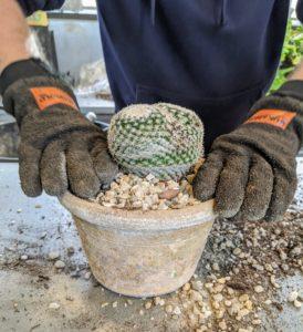 Ryan adds some pea gravel to the top of the pot. Pea gravel, so named because the pieces are pea-sized, is available at garden centers and comes in different colors.