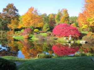 One of my favorite places to stop whenever I am in Maine is the Asticou Azalea Garden in Northeast Harbor. Asticou Azalea Garden was created in 1956 by lifelong Maine resident, Charles Kenneth Savage, who was inspired by his love of native plants and his study of Japanese garden design. The Garden and its pond are open to the public from May to October each year. The fall colors are stunning.