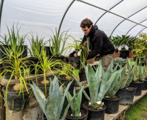Ryan adjusts the plants in this greenhouse, so every specimen has ample air circulation. The shelves here are also tiered to use up all the space in the structure.