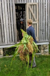 Next, Ryan and Gavin bring the bundles of broom corn to the corn crib where they could dry undisturbed for the next two to three weeks.