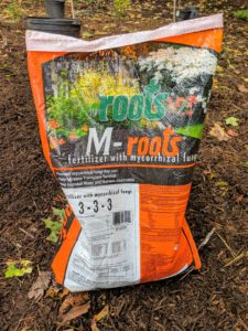 As we do with all the trees planted at the farm, a good amount of compost is added to the existing soil in each hole. A scoop of good fertilizer is then sprinkled on the surrounding soil. We use M-Roots with mycorrhizal fungi, which helps transplant survival and increases water and nutrient absorption.