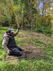 We always use bamboo. Bamboo comes in a variety of lengths and is easy to find at garden supply stores. Pete uses taller stakes because the seedlings are already more than six-feet tall. Any bamboo pieces that are cut off are saved for smaller trees.