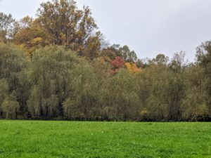 Across the field is my grove of weeping willow trees. I've planted so many trees here at the farm – I am always amazed at how much they grow and thrive here.
