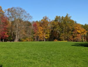 """This photo uses the """"zoom"""" feature on the phone and shows the autumn trees across my large lower hayfield."""