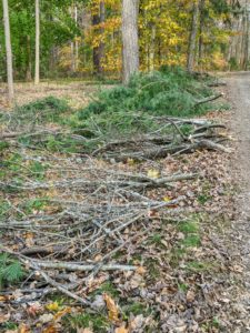 After every rainstorm, the outdoor grounds crew picks up all the fallen branches around the farm and piles them up neatly along the edge of the carriage road. These branches fell after the last storm hit the area. They will soon be put through the chipper and spread over the beds.