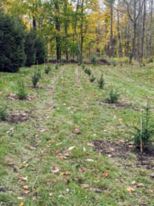 All these trees are a great addition to the ever-evolving landscape at my farm. I am excited to see them develop and flourish. And they're great for the wildlife - birds use them for protection and for nesting. What trees are you planting this season? Share your comments with me below.