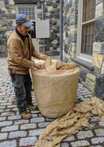 "And the ""burlapping"" has begun. Here's Chhiring wrapping one of the large garden containers in my stable courtyard."