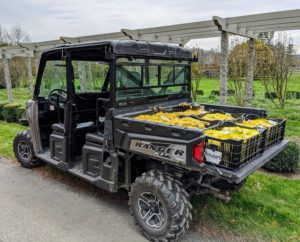 Everyone at the farm loves our Polaris vehicles. This is the Polaris Ranger Crew 1000 filled with crates of bulbs from one of my favorite sources, Colorblends Flower Bulbs - a third-generation wholesale flower merchant in nearby Bridgeport, Connecticut.