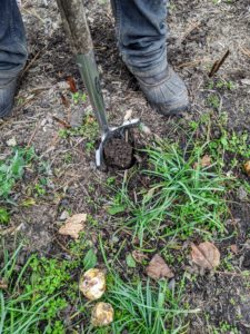 Using the stand-up bulb planter, Phurba makes the hole wherever the bulb is positioned.