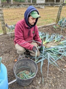 Once harvested, Ryan removes the tough, darker green leaves and trims them down to where they turn a paler green.