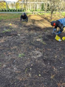 Gavin and Phurba work quickly to get all the bulbs planted before the cold weather arrives.