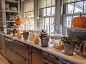 More plants and autumn fruits adorn this side of my servery.