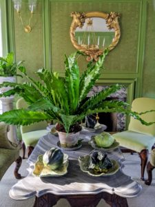 This gorgeous lush green fern sits on the coffee table of my green room with gourds grown here at the farm.