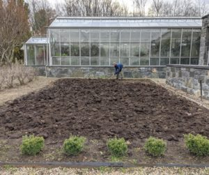 This year, I decided to plant the garlic in the bed next to the main greenhouse. It is the same bed we used for this year's dahlias. Next spring, the garlic will be harvested just in time to replant the dahlia bulbs. Garlic likes loose, loamy and nutrient-filled soil with plenty of organic matter, compost, manure, and fertilizer.