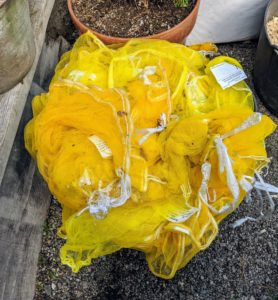 All those mesh bags saved from our bulb orders come in handy for storing tubers. These bags come in a variety of sizes and provide lots of air circulation. If you don't have any mesh bags, any well-ventilated bags or boxes will do.