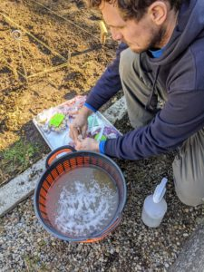 Ryan brings the garlic and the solution mix outside to the garden bed, making sure each group of cloves remains labeled for accurate identification.