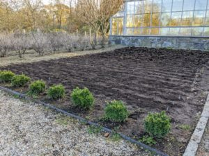 All the rows are now planted and the entire bed is full. A handsome row of boxwood lines the front of the garden bed.