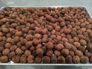 They can be stored for up to a year in the fridge and for two or more years in the freezer. I am looking forward to baking and cooking with these walnuts grown right here at my farm.