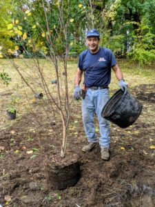 Carlos carefully removes each pot from the tree. These trees are very healthy. I've been nurturing them in pots for a couple of years and already they've grown at least a foot since I purchased them. Birch trees grow well in acidic, loamy, moist, sandy, well-drained and clay soils.
